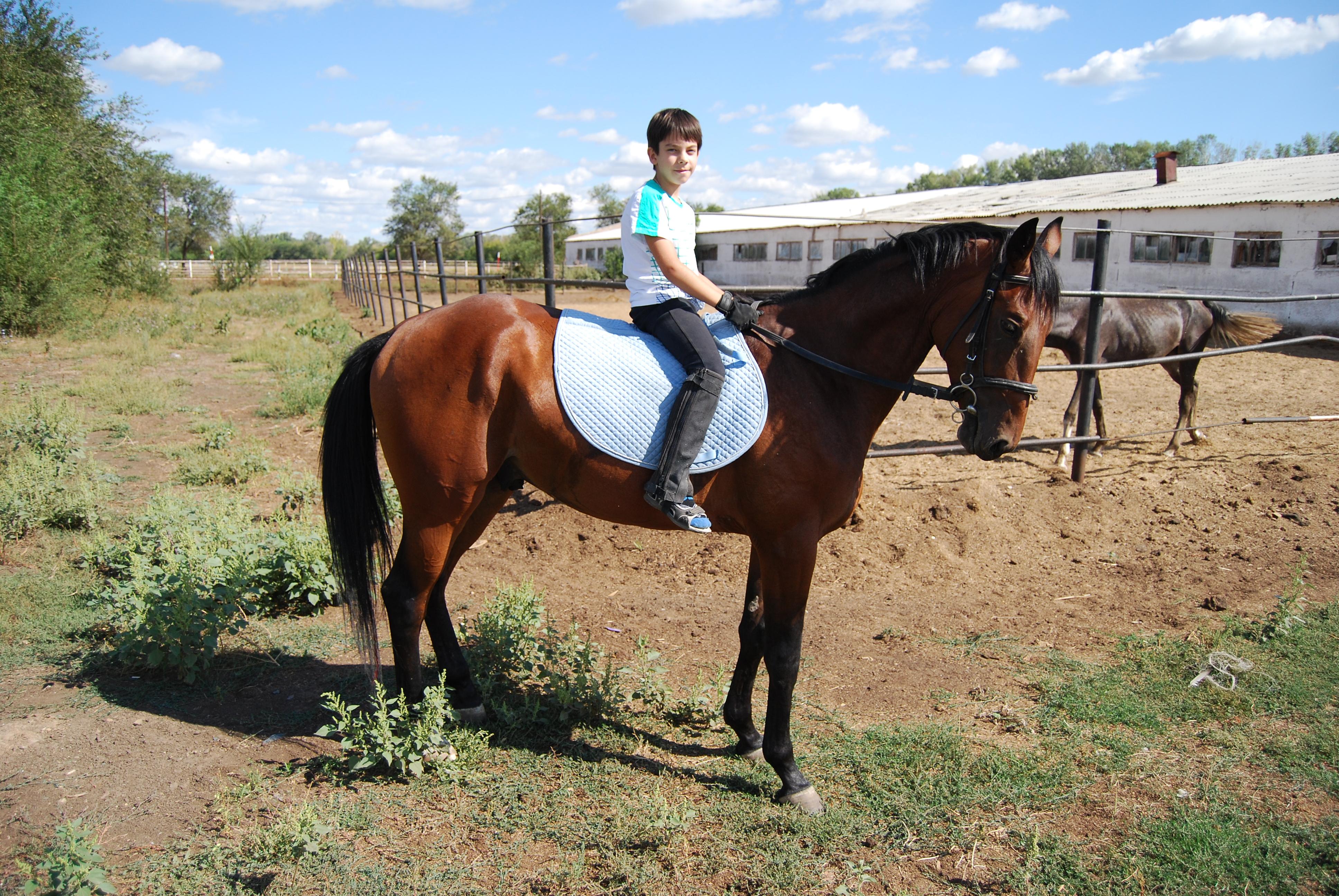 сочинение первое знакомство с лошадью